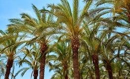 Paisaje tropical Fotografía de archivo libre de regalías