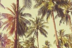 Paisaje tropical Foto de archivo libre de regalías