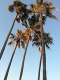 Paisaje tropical Fotos de archivo libres de regalías