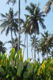 Paisaje tropical Foto de archivo