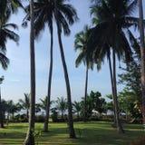 Paisaje tropical Imagen de archivo