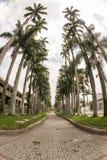 Paisaje tropical Imagen de archivo libre de regalías