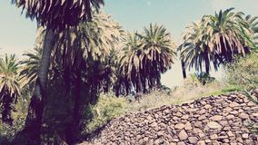 Paisaje tropical imagenes de archivo