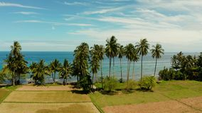 Paisaje tropical, campos y el mar Camiguin, Filipinas del arroz almacen de video
