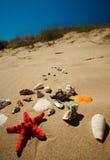 Paisaje tropical con el shell Fotos de archivo libres de regalías