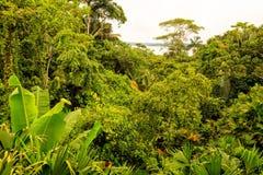 Paisaje tropical de la selva tropical Imágenes de archivo libres de regalías