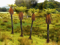 Paisaje tropical de la selva tropical Foto de archivo