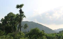 Paisaje tropical de palmeras y de colinas fotografía de archivo libre de regalías