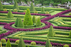 Paisaje tropical del árbol de las plantas ornamentales en jardín de la naturaleza Foto de archivo libre de regalías