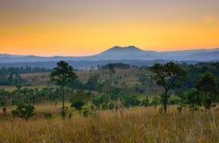 Paisaje tropical del bosque en la salida del sol fotos de archivo libres de regalías
