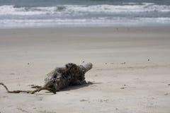 Paisaje tropical. gancho en la playa Foto de archivo libre de regalías