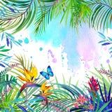 Paisaje tropical, hojas, flores y mariposa del bosque Imagenes de archivo
