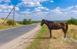 Paisaje ucraniano del verano con el caballo en el borde de la carretera Imagen de archivo