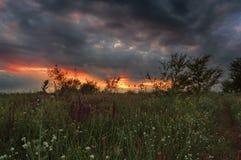 Paisaje ucraniano del verano Primer de la hierba Puesta del sol en estepa Puesta del sol en la naturaleza salvaje fotos de archivo