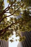Paisaje urbano con un árbol foto de archivo libre de regalías
