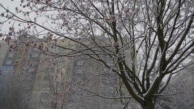 Paisaje urbano del invierno almacen de video
