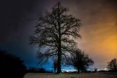 Paisaje urbano hermoso del árbol en fondo Imagenes de archivo