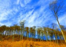 Paisaje ventoso Foto de archivo libre de regalías