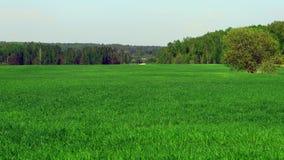Paisaje verde Fotos de archivo