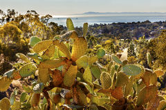 Paisaje verde Channe del Océano Pacífico de la mañana del cactus del higo chumbo Imágenes de archivo libres de regalías