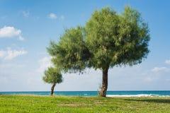Paisaje verde con el fondo del cielo azul Foto de archivo