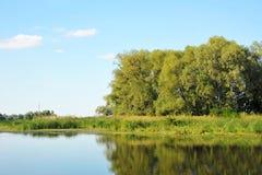 Paisaje verde con el río y el árbol fotografía de archivo