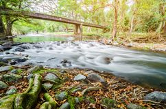 Paisaje verde de la corriente del río del bosque de la cascada imagen de archivo