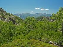 Paisaje verde de la montaña del bosque del abedul con un cielo azul Fotos de archivo libres de regalías