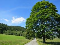 Paisaje verde de la naturaleza Imagenes de archivo