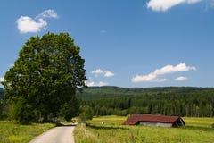 Paisaje verde de la naturaleza Fotografía de archivo