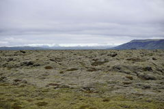 Paisaje verde de la naturaleza islandesa con las piedras cubiertas por el musgo con las montañas en el fondo Imagen de archivo libre de regalías
