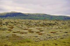 Paisaje verde de la naturaleza islandesa con las piedras cubiertas por el musgo con las montañas en el fondo Imágenes de archivo libres de regalías