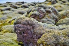Paisaje verde de la naturaleza islandesa con las piedras cubiertas por el musgo con las montañas en el fondo Foto de archivo