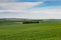 Paisaje verde de Sussex Imagen de archivo