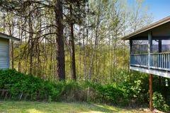 Paisaje verde del bosque Visión desde el patio trasero Imagen de archivo libre de regalías