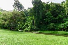 Paisaje verde del césped con el río grande del árbol y de la corriente Fotos de archivo