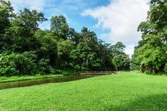 Paisaje verde del césped con el río grande del árbol y de la corriente Fotografía de archivo libre de regalías