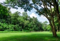 Paisaje verde del césped con el río grande del árbol y de la corriente Imagen de archivo libre de regalías