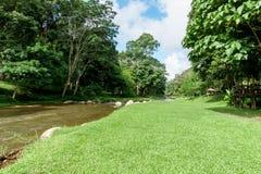 Paisaje verde del césped con el río grande del árbol y de la corriente Fotografía de archivo