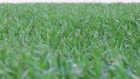 Paisaje verde del campo metrajes