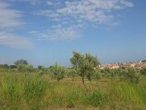 Paisaje verde del campo Fotografía de archivo