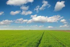Paisaje verde del campo de trigo Imagen de archivo libre de regalías