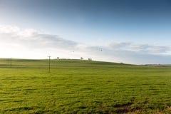 Paisaje verde del campo del pasto Imágenes de archivo libres de regalías