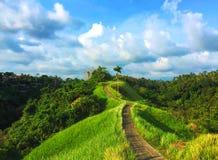 Paisaje verde del paraíso con el campo del arroz y el bosque salvaje Imágenes de archivo libres de regalías