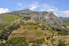 Paisaje verde en la isla de Samos, Grecia Imagenes de archivo