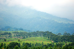 Paisaje verde en un pico brumoso Foto de archivo