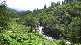 Paisaje verde hermoso de la naturaleza del bosque y de los ríos en la región del Mar Negro, Artvin, Turquía metrajes