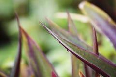Paisaje verde púrpura del fondo Foto de archivo libre de regalías