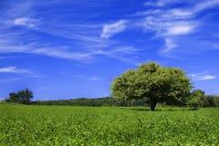 Paisaje verde y azul Fotografía de archivo libre de regalías