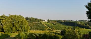 Paisaje-viñedo del viñedo del sur al oeste de Francia, Burdeos Viney Fotografía de archivo libre de regalías